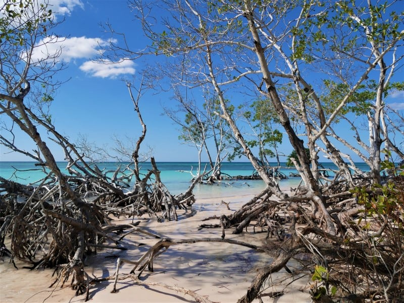 mangroves and turquoise waters in Cuba, Cayo Jutías